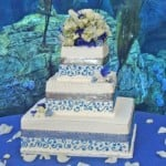 wedding cake blue silver ribbon long beach aquarium